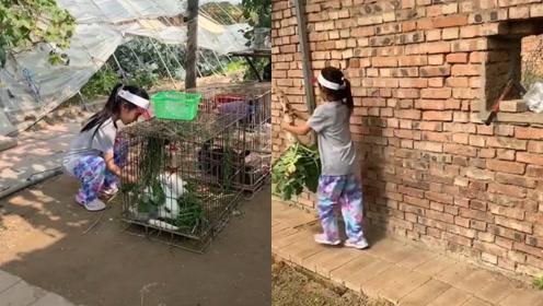 李小璐带女儿体验乡村生活,拔萝卜喂小动物,甜馨变高越来越像妈妈