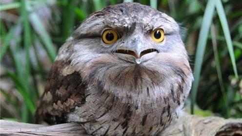 """最""""佛系""""的猫头鹰,没事就爱装树枝,不仔细看还发现不了"""