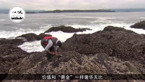 """世界最""""奢华""""的4种海鲜,中国螃蟹上榜,尝过两种的绝对土豪!"""