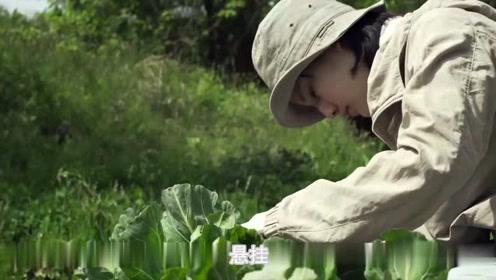 《小森林冬春篇》:有些食物只有天冷的时候才能做