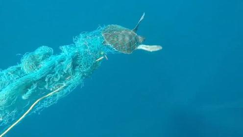 一只被渔网困住的海龟,还好被小哥发现,解救了下来