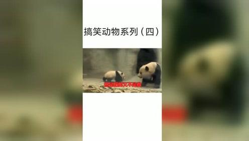 大熊猫:我有一个暴躁的妈妈,总是不小心坑到我,我太难了真的太难了