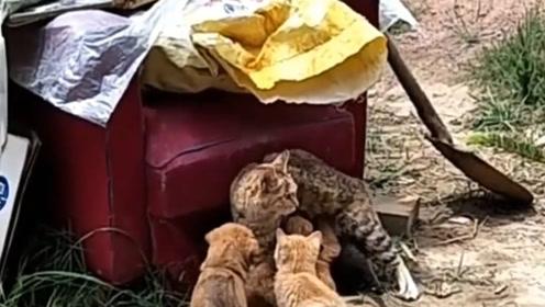 """猫咪被一群小狗""""劫奶""""了,好无奈的眼神啊,看笑了!"""