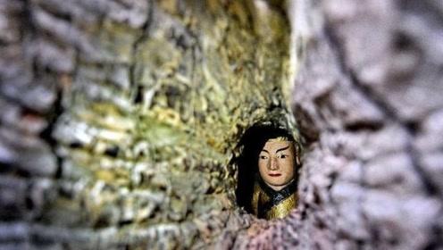 """福建出现""""树抱佛""""奇观,一千年古樟树内,藏着一尊60米高的大佛"""