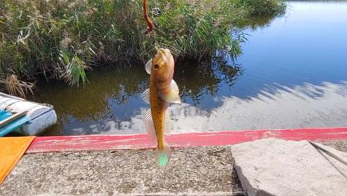 钓鱼:收获的都是一些小鱼