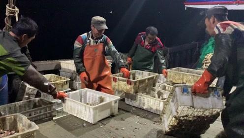 大胖家的渔船半夜11点收网,遇到一大群螃蟹,全部放回海里