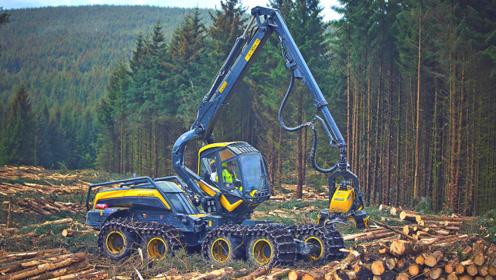 """德国最专业的""""伐木机"""",全自动化机械,一天能干掉一个森林!"""