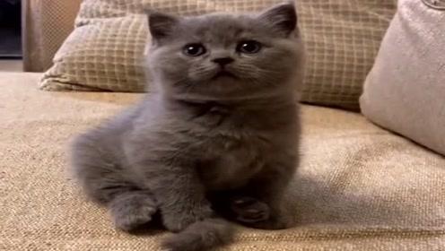自从女友买了这只猫,我就是失宠了,压根没工夫搭理我!