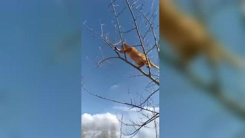 爬树抓老鼠,现在还有这门手艺的猫不多了!!