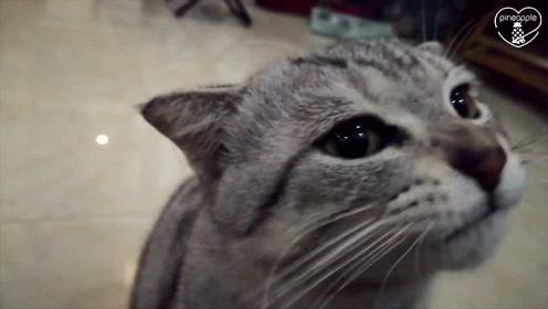 小猫可怜巴巴问主人要吃的,却被主人果断拒绝:你瞧你都胖成啥了?
