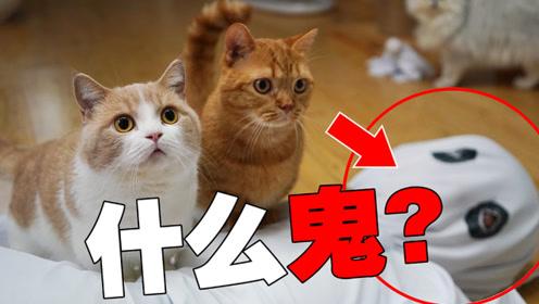 猫:我今天TM见鬼了!前面吓到,后面又笑死!