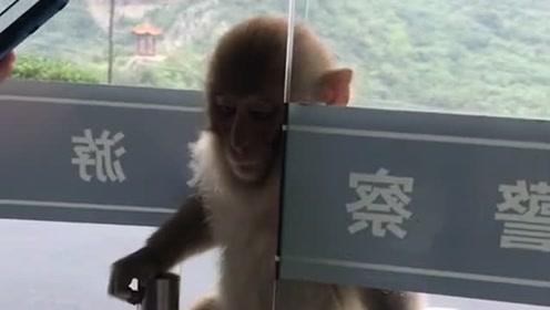 大闹警察局的猴子,不愧是孙悟空的猴子猴孙,真是天不怕地不怕!