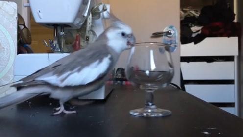 鹦鹉失恋后,主人开始了悲剧的生活,网友:太难了