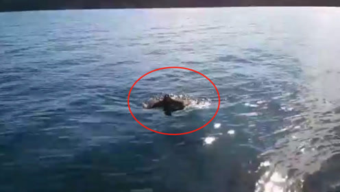 渔民出海捕鱼,突然发现海面上不太对劲,看清后果断停下船