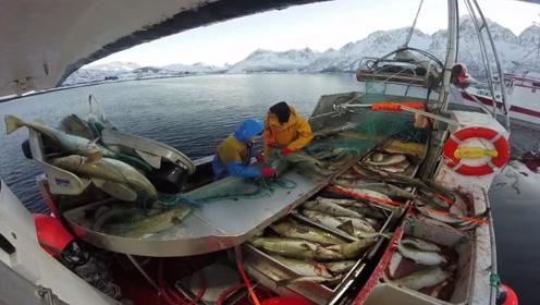 一张渔网,两个人摘鱼都忙不过来,鱼船还是有点小啊