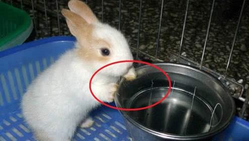 兔子喝水就会死?难道它们不渴吗?听听专家是如何说的!