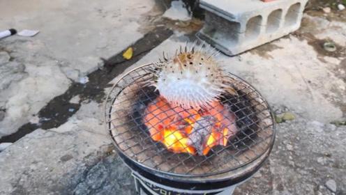 日本小伙炭火烤河豚,看到河豚的表情,网友直呼无法忍受!