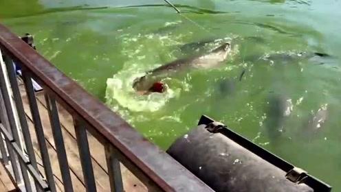 钓鱼:挂小鱼喂大鱼,这是什么鱼?