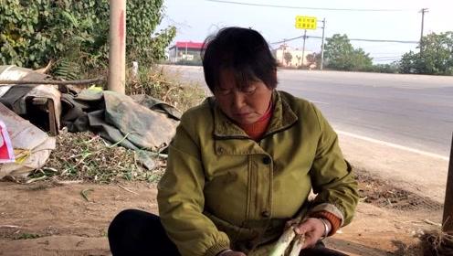 乾县漠西大姐:今年大葱产量不行客商少,听听批发价多钱