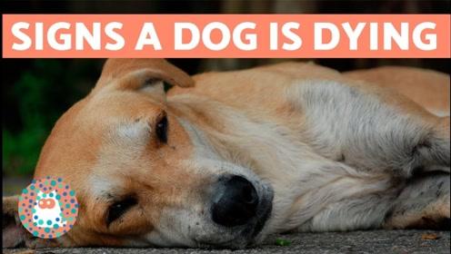 为什么都喜欢养公狗而不是母狗?现在可算是看明白了