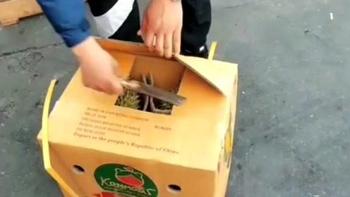 网上买的榴莲只有巴掌大,还以为亏大了,一刀下去赚翻了!