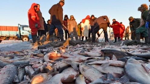 鱼为何在查干湖泛滥成灾?附近渔民道出实情:都是这群人干的!