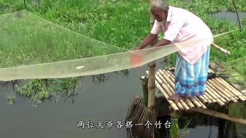 用尽全力猛一提网,瞬间就有好几条鱼入了网