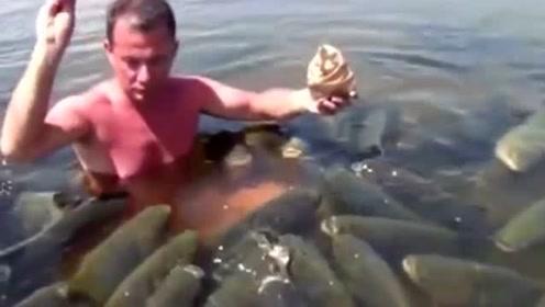 男子下水喂鱼,水面瞬间黑压压的一片,看着非常的壮观