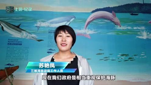 """上游记录丨来钦州!与""""海上大熊猫""""亲密接触 看!""""五彩海豚""""海中嬉戏"""
