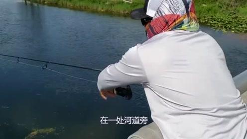 老外脑洞大开,将摄像机绑在鱼身上,意外拍摄到神奇画面!