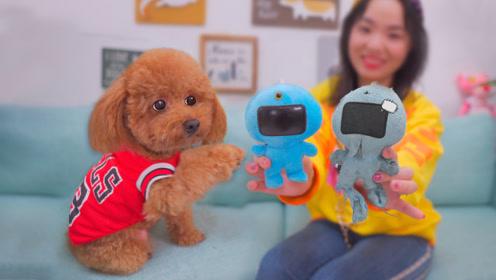 狗狗唯一的玩具坏了,主人四处托人寻来个新的,狗子抱住就不撒手!