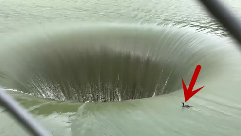 一只鸭子想不开,漫无目的游向60米泄洪深渊,让人匪夷所思