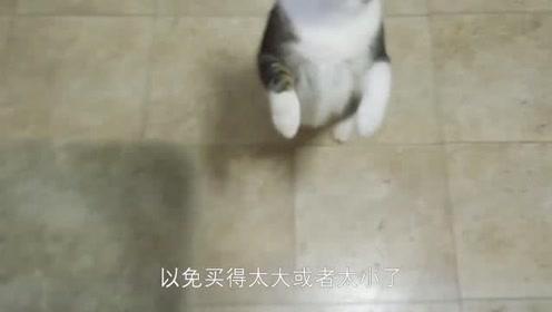 猫咪吃不完的罐头,你知道如何正确的保鲜吗?
