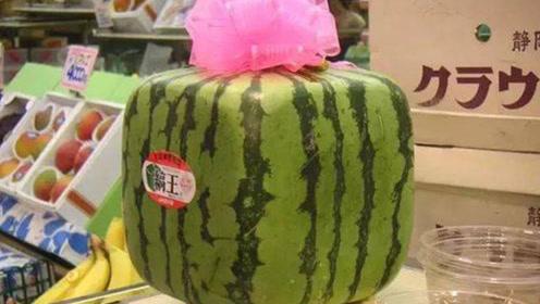 日本培育出4万一个的水果,有钱也没地买,在我国只卖3元一斤?