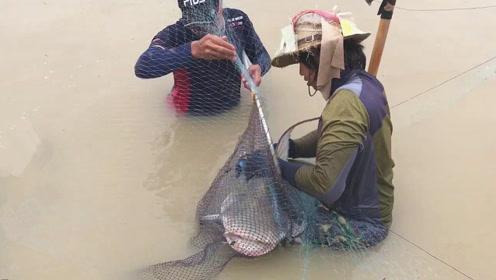 水中渔网刚被提起,美女忽然大声尖叫,没想到捕获这么大的宝贝