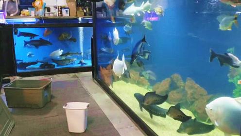 朋友家霸气的大型鱼缸,慢慢走近一瞧,没想到把我彻底吸引住了!