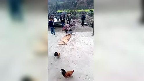 求鸡的心理阴影面积