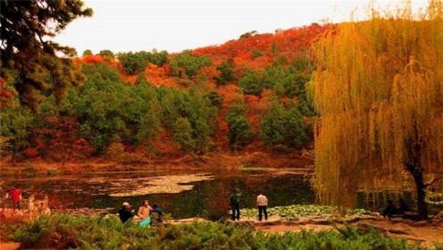 """被称为""""小北京""""的陕西香山,秋季枫叶红似火,毫不逊色北京香山"""