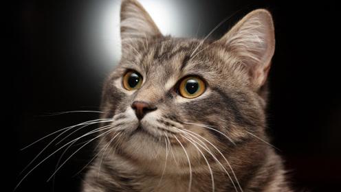 为什么猫的胡须不能剪,剪了会怎么样?铲屎官:路都不会走了!