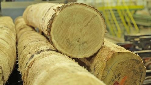 木地板为何卖得贵,用个视频让你了解下生产过程