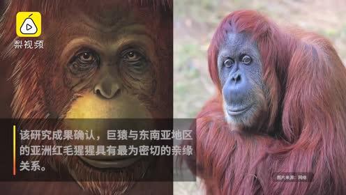 科学家从190万年前化石提取DNA,广西巨猿和亚洲猩猩是亲戚