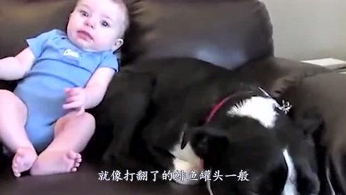 婴儿趴狗狗身上突然放了个屁,下一秒狗狗的反应,引人爆笑!