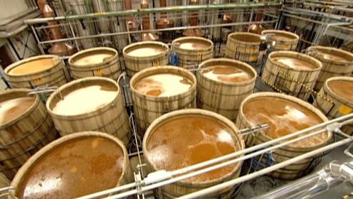 龙舌兰酒为何这么贵?看看制作过程,你就知道了!