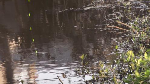 初冬降温钓草边,一个窝点出好几条鱼