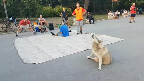 狗狗发现街上有人跳舞,上去露了一手,下一秒憋住别笑
