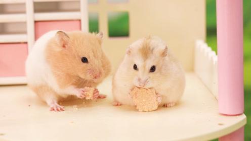 仓鼠和闺蜜相约素颜出行,见面后却暴露心机,说好的减肥变成笑话