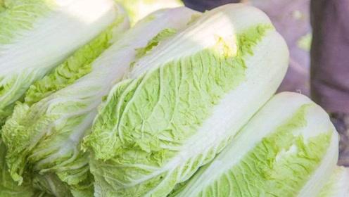 大白菜减产,韩国向山东菜农求助,地头打包出口,一年多赚几万?