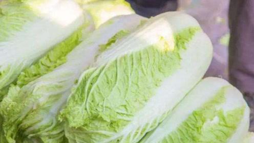 冬季孩子常吃大白菜,促进开胃健脾,还有这3个好处妈妈不清楚