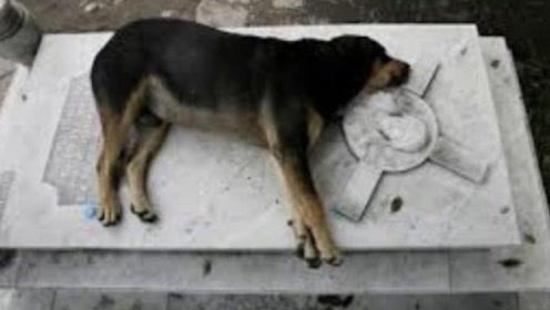 主人去世后,狗狗挖洞守墓三年,把狗狗拉出来时却发现意外惊喜
