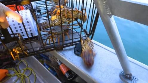 龙虾中的贵族,新西兰岩虾,一笼子蹦蹦跳跳真刺激!